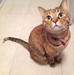 Mayka, chat Gouttière