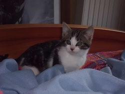 Mayou, chat Gouttière