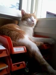 Mazout, chat Gouttière