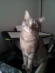 Meeko, chat