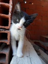 Mektoub, chat Gouttière