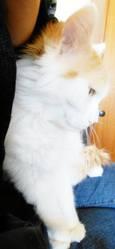Mél Lyne, chat