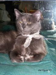 Melchior, chat Gouttière