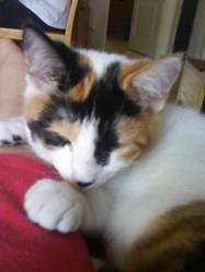Mélie, chat Gouttière