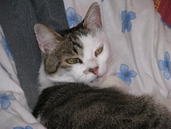 Méline, chat