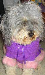 Melissa, chien Caniche
