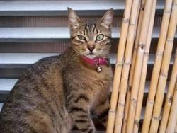 Micha, chat Gouttière