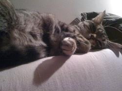 Melkior, chat Gouttière