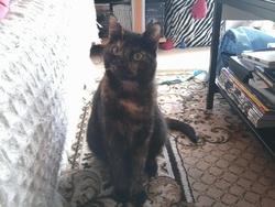 Mélusine, chat