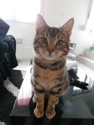 Meow, chat Gouttière