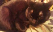 Mephisto, chat Gouttière
