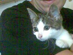 Méphisto, chat Gouttière