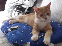 Merlin, chat Gouttière