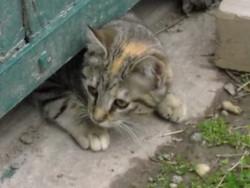 Merveille, chat