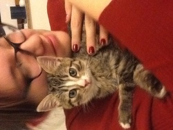 Mery, chat Gouttière