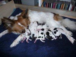 Mes Bebes, chien