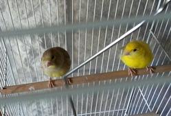 Mes Oiseaux, autres