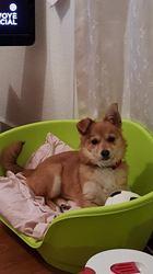 Mia, chien