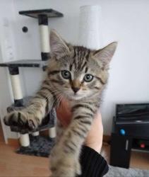 Mia, chat Gouttière
