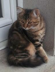 Inna, chat Gouttière