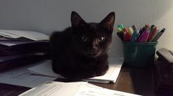 Mio Gatto, chat