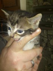 Miaouss, chat Gouttière
