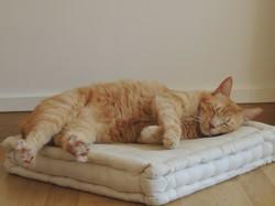 Michka, chat Gouttière