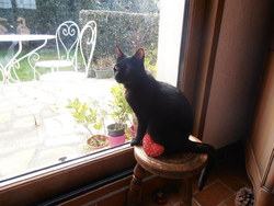 Michka, chat Européen
