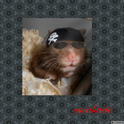 Cacahuete, rongeur Hamster