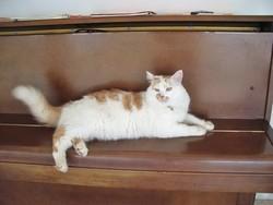 Micky Dcd En 2010, chat Gouttière