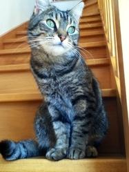 Midgy, chat Gouttière