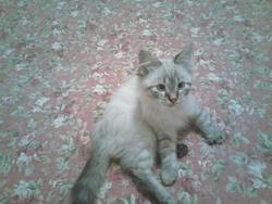 Miel, chat