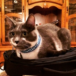 Miel, chat Gouttière