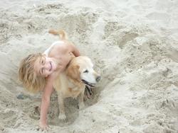 Miele, chien Labrador Retriever