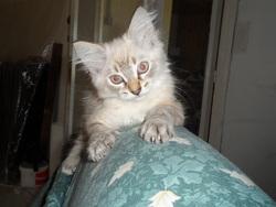 Mihos, chat