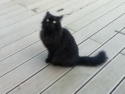 Mika, chat Européen