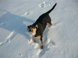 Mika, chien