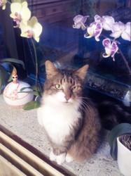 Mikado, chat Gouttière