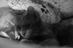 Mikanouchka, chat
