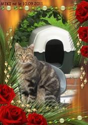 Miki, chat Gouttière
