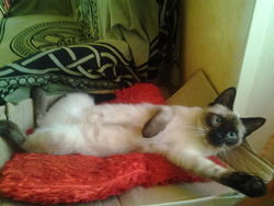 Miky, chat