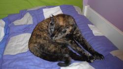 Mila, chat Gouttière