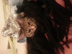 Milédie, chat