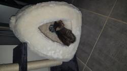 Milka, chaton Gouttière