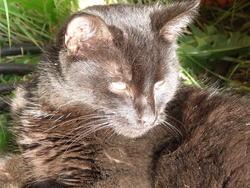Milkiway, chat Gouttière