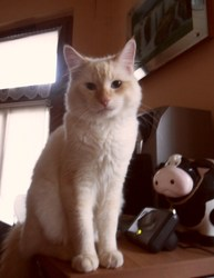 Milky, chat