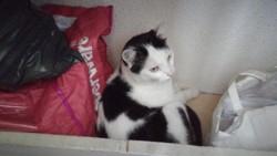 Mille Et Vie, chat Gouttière