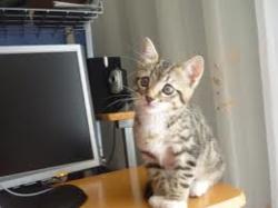 Millou, chat Gouttière