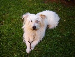 Millou, chien