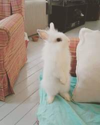 Milo, rongeur Lapin